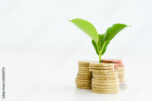 Fotografía  Profitable investment of money concept with isolated plant and coins