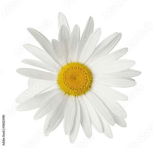 In de dag Madeliefjes Beautiful chamomile flower isolated on white