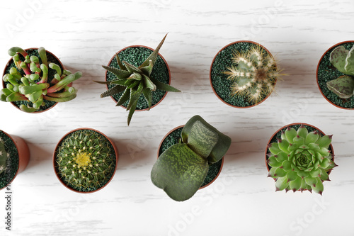 Valokuva  Different succulents and cactus in pots on light wooden background