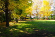 Autumn of Aobanomori Park Chiba Japan