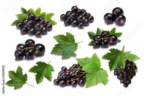 Set of blackcurrant berries (Ribes Nigrum) and leaves, paths Wallpaper Mural