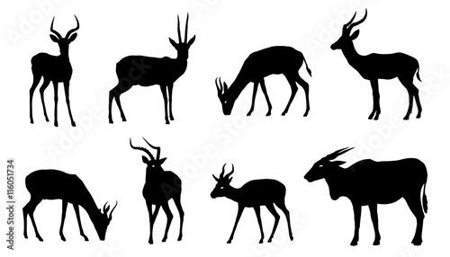 antelope silhouettes Canvas Print