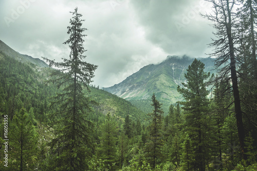 obraz dibond scenic view of mountain forests covering by fog