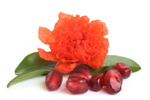 Pomegranate Seeds With Flower And Leaves