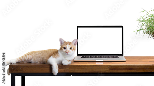 Keuken foto achterwand Kat cat sitting with blank laptop on wooden table isolated on white