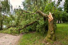 A Fallen Tree After Hurricane