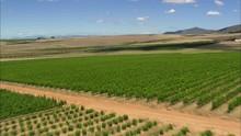Vineyards Near Darling