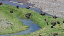 Soda Buutte Creek And Buffalo