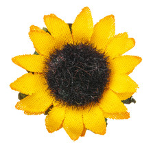Sunflower Flower Head Isolated...