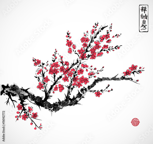 Oriental Red Sakura Cherry Tree In Blossom On White Background Traditional Ink Painting Sumi