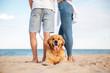 Cute dog lying near young couple on the beach