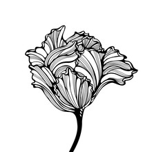 Head Of Tulip Engraving Style