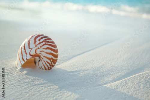 nautilus shell on white beach sand, against sea waves Tableau sur Toile