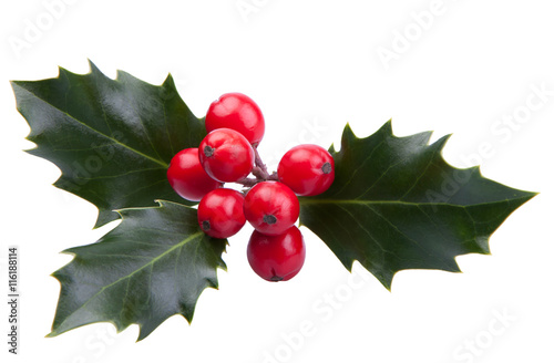Sprig of Christmas holly with red berries isolated on a white background