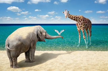 FototapetaElephant, seagull and giraffe at the beach