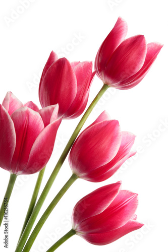Poster Tulp Bouquet from five flowers