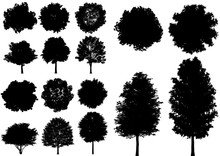 Vector Deciduous Tree Isolated...