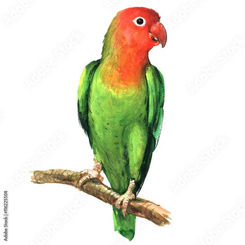 kolorowa-siedzaca-papuga