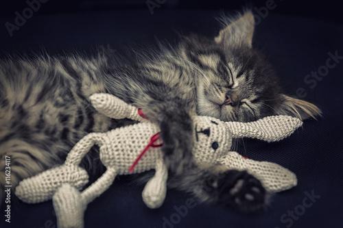 Photo Schlafendes Kätzchen mit Kuscheltier