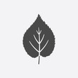 Linden leaf icon black simple. Singe nature icon from the big forest set.
