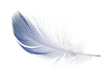 Blue Feather With Small Dark S...