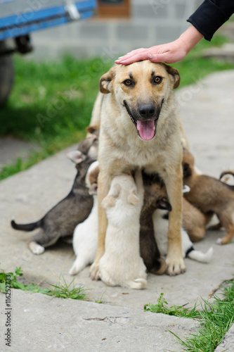 Deurstickers Franse bulldog Mather dog feed it's puppies