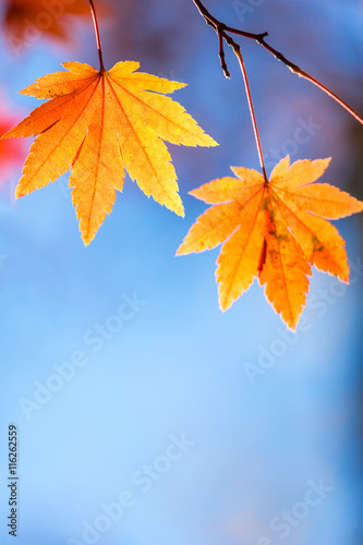 Photo  autumn background Red leave with free copyspace