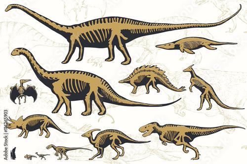 Zestaw sylwetki szkieletów dinozaurów i skamielin. Ręcznie rysowane ilustracji wektorowych. Sylwetki mężczyzny i dzieci, porównanie rozmiarów, realistyczny rozmiar, oddzielone elementy.