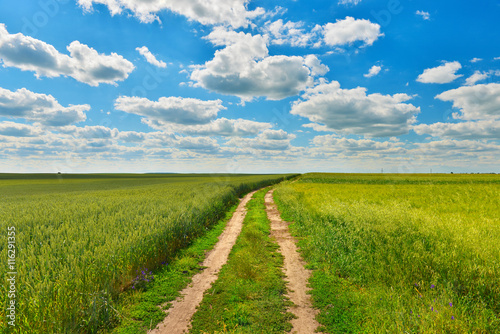 Fototapety, obrazy: Countryside