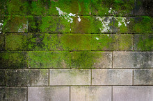 Wall Moss Green Background
