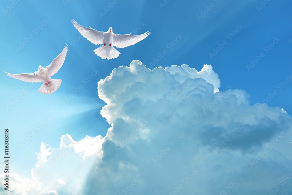 White Holy Doves flying in cloudy sky