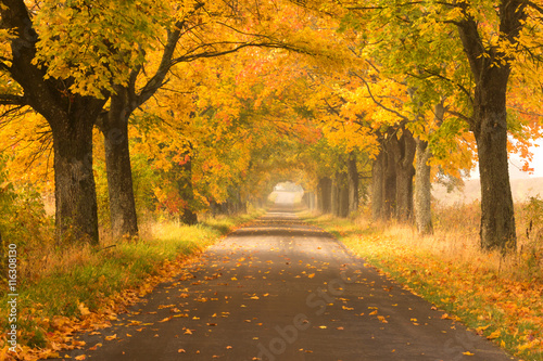 Montage in der Fensternische Herbst Northern Poland./ Autumn road.