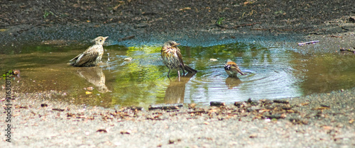 image of sparrows in city close-up Wallpaper Mural