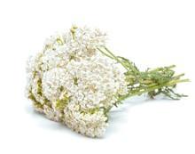 Yarrow Flowers Isolated On Whi...