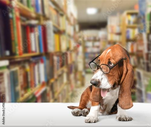 Dog. - 116334190