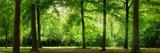Fototapeta Las - Panorama von Wald im verträumten sanften Licht und leichten Dunst
