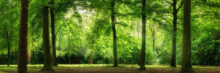Panel Szklany Podświetlane Style Panorama von Wald im verträumten sanften Licht und leichten Dunst