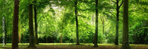 Fotobehang Bossen Panorama von Wald im verträumten sanften Licht und leichten Dunst