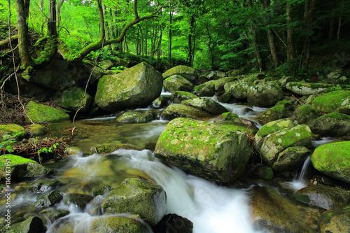 Aluminium Prints Forest river 夏の渓流