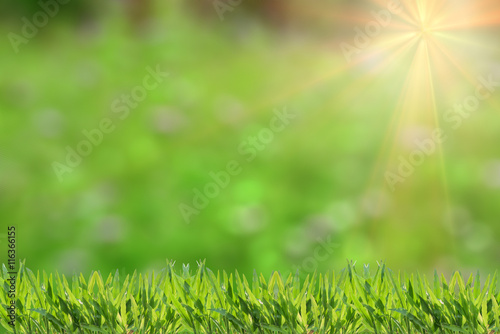Photo sur Toile Herbe Fresh grass abstract background, bright field with sunlight, beautiful nature at spring, soft focus, ecology and energy concept