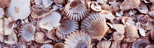 Pile of colorful shells, Wellfleet Massachusetts on Cape Cod-Proportionate to Large Mobile Banner