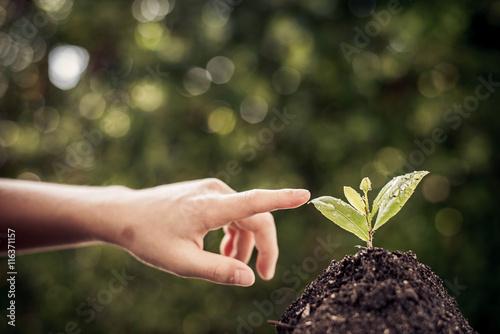 Foto op Aluminium Lente Point to seedling