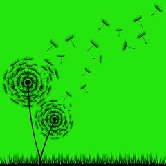 Fototapeta Do pokoju młodzieżowego Dandelion Seeds
