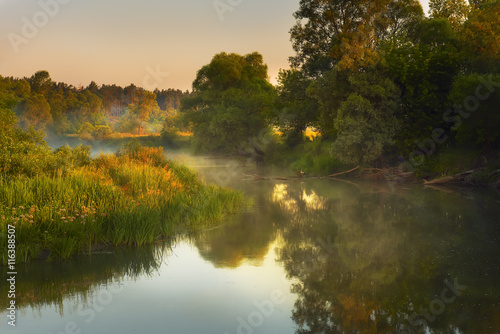 Papiers peints Riviere small quiet river at dawn, green overgrown coast meandering river, fog, mist over the water. In the background is the warm sunshine. On old snags and fallen trees bird stork. Summer morning