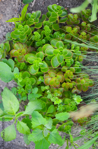 Fototapety, obrazy: nature background of leaves on the front  the ground