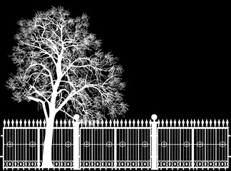 Plakat large bare tree and fence isolated on black background