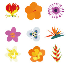 Set Of Nine Exotic Flowers Containing: Flame Lily, Orange Hibiscus, African Daisy, Plumeria, Moraea Villosa, Bird Of Paradise, Vanilla, Tropical Rhododendron, Heliconia Wagneriana.