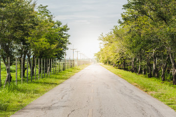 Fototapeta na wymiar Beautiful view of country road lined with trees
