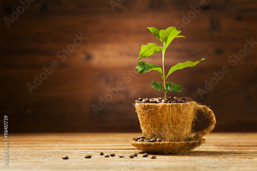 In de dag Cafe Coffee tree grows out of a cup of coffee beans.