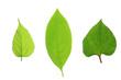 3種類の葉っぱ
